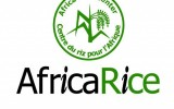 Rice research and development in Africa create history