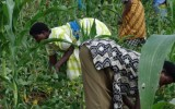 Carbon projects for smallholder farmers can 'reduce poverty'