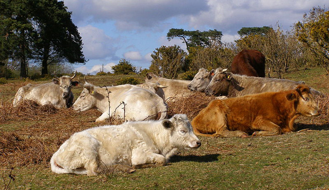 A game-changing food source for livestock