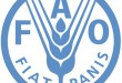 FAO assists Kenyan communities to diversify in Agriculture
