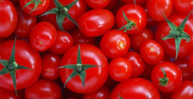SA: Good pickings for local tomato farmers