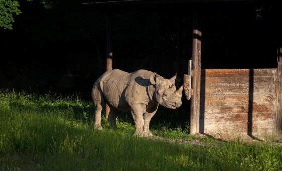 Eliska the Rhino